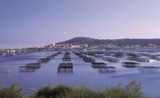 La lagune de Thau