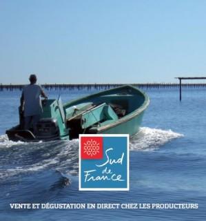 Venez découvrir les coquillages du Languedoc-Roussillon