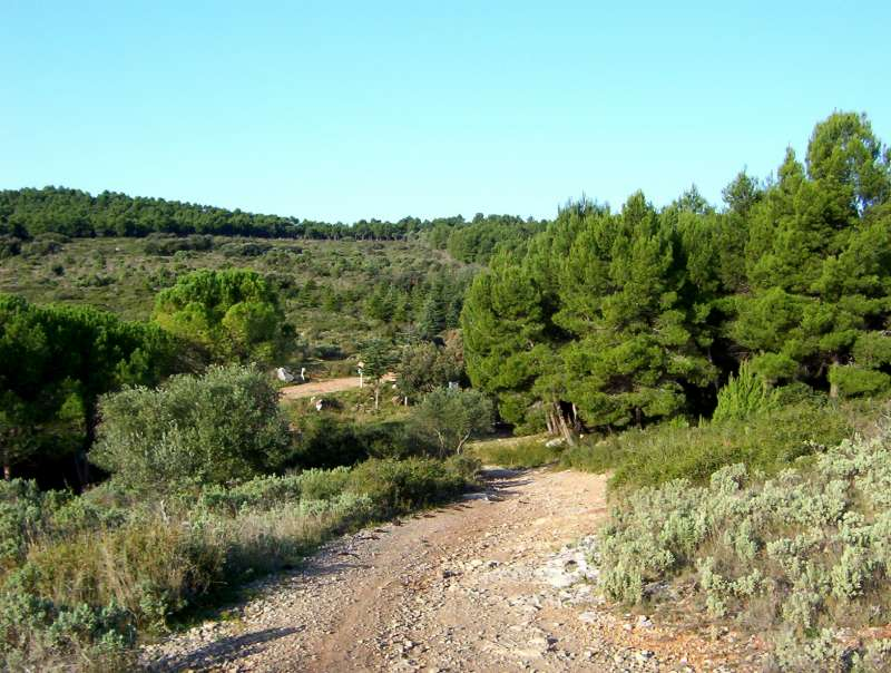 garrigue-vic-la-gardiole-43
