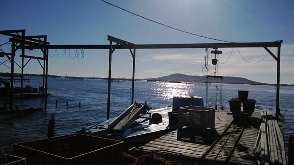 Autour de la lagune de Thau Sortie commentée en mini bus avec Sète Grand Tour